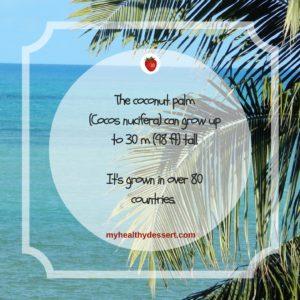 coconut palm tall