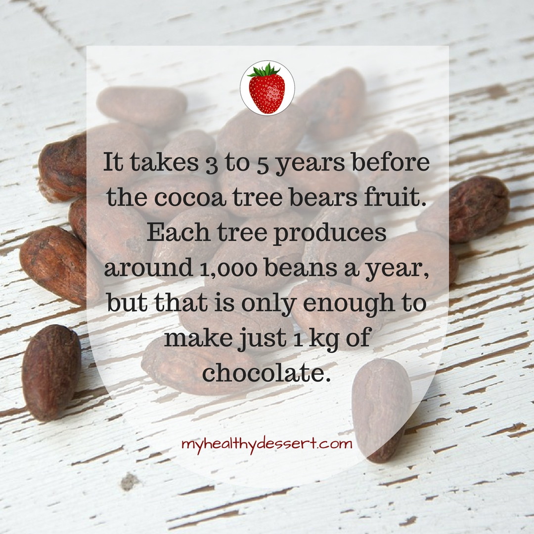 10 Interesting Facts About Chocolate My Healthy Dessert